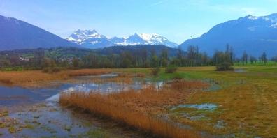 Das geschützte Kaltbrunner Riet ist letzter Überrest der früheren Sümpfe zwischen Walen- und Zürichsee.