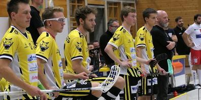 Die Rheintal Gators freuen sich schon auf den Heimmatch am Sonntag