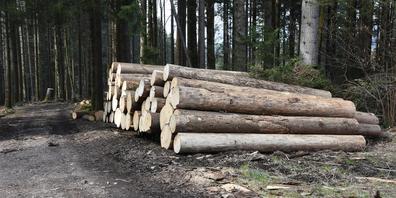 Im Kanton Schwyz wurde 2020 etwas mehr Holz geerntet, als im Vorjahr.