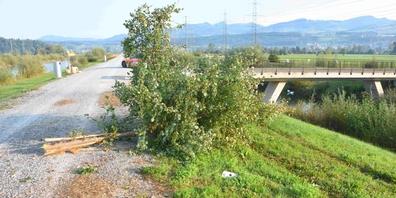 Eine unbekannte Person kam mit ihrem Auto vom Linthdammweg ab und kollidierte mit einem Schild sowie einem Baum.