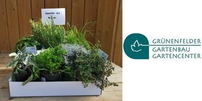 Beim Gartencenter Grünenfelder sind verschiedene Boxen erhältlich: Beeren, Kräuter (im Bild), Selbstversorger...