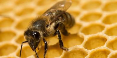 2021 war für Schweizer Imkerinnen und Imker ein sehr schlechtes Honigjahr. Das schlechte Wetter im Frühling und im Sommer führte zu einer mageren Honigernte. (Symbolbild)