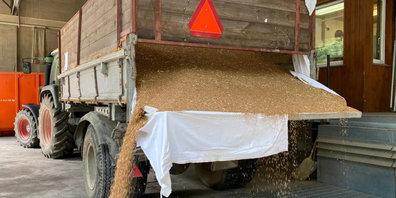 «Katastrophale Getreideernte»: Hohe Ausfälle wegen Fusarienbefall auf dem Juckerhof.