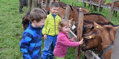 Leuchtende Kinderaugen gab es, als die Ziegen gestreichelt werden durften.