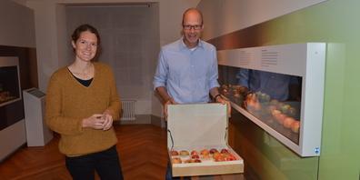Nur einer der Äpfel im Koffer ist echt, aber welcher? Museumsgestalterin Eliane Huber und Museumsleiter Hannes Geisser in der neuen Ausstellung im Naturmuseum Thurgau.