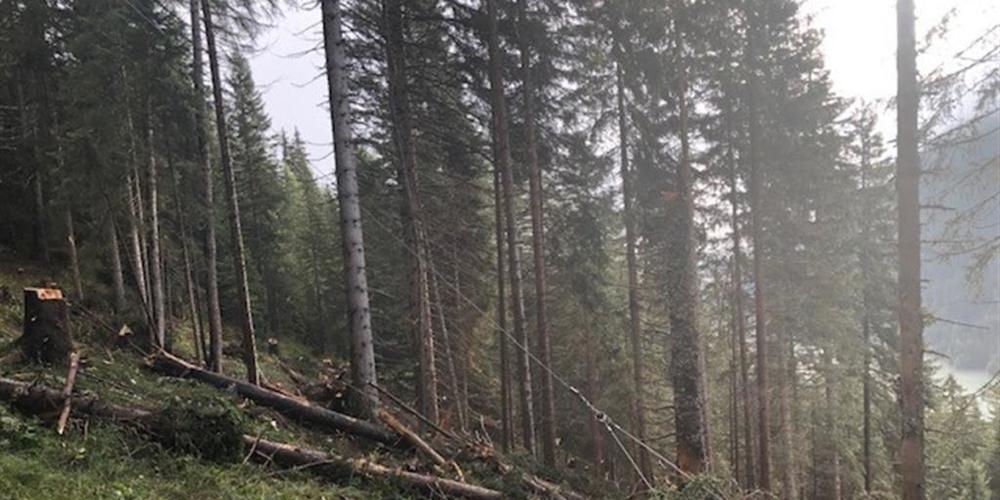 Ein Baumstamm traf den Forstwart am Unterschenkel, worauf dieser brach.