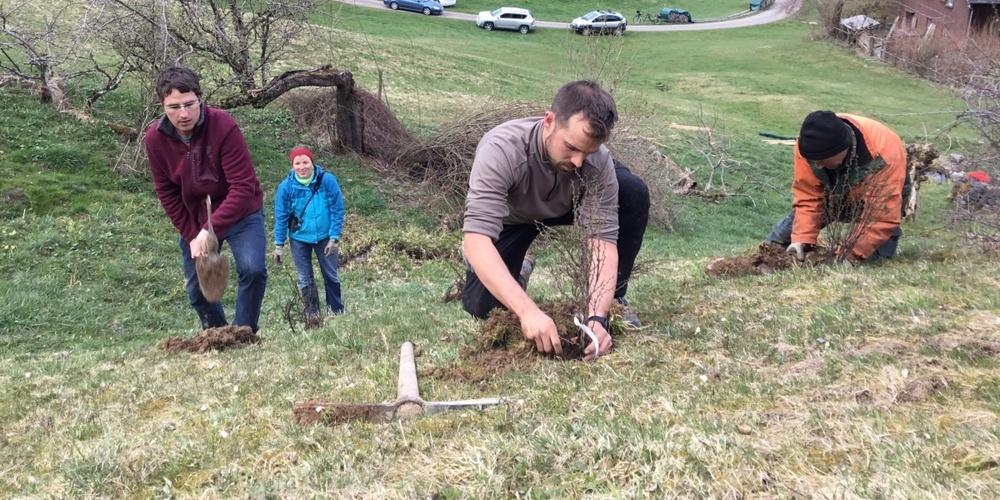 Im Biotop Allmenweg hat der Vorstand des Naturschutzvereins nathur zusätzliche Sträucher gepflanzt.