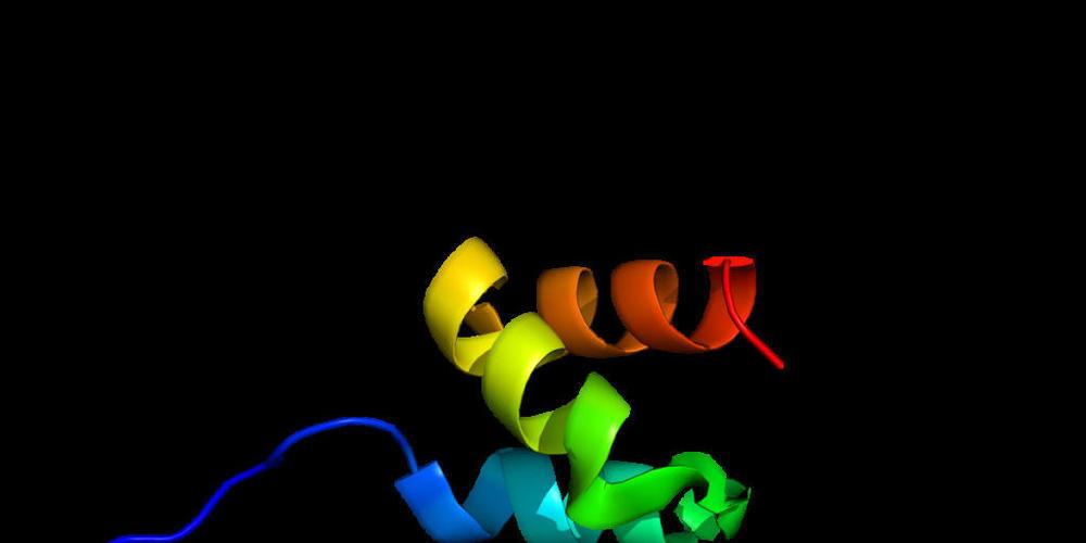 """Das Enzym HUWE1 ist in der Lage, einer Vielzahl von unerwünschten Proteinen sozusagen den Todeskuss zu geben: Es versieht sie mit einer Markierung, die sie zum """"Abschuss"""" freigibt. Das eröffnet neue therapeutische Möglichkeiten (Wikimedia)"""