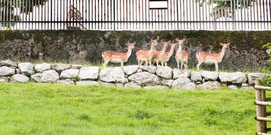 Seit 150 Jahre besteht der Hirschpark auf dem Lindenhügel in Rapperswil.