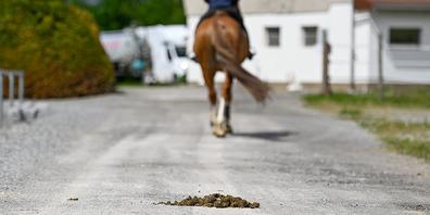 Tuggner Reiter werden gebeten, den Mist von Geh- und Velowegen wegzuräumen.